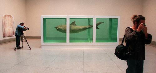 A tiger shark, encased in formaldehyde solution, by artist Damien Hirst